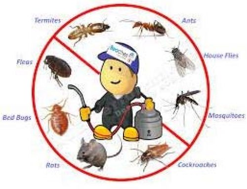 Termite Pheromones – Termite Pest Removal