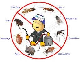 Northern Beaches Pest Control Exprt